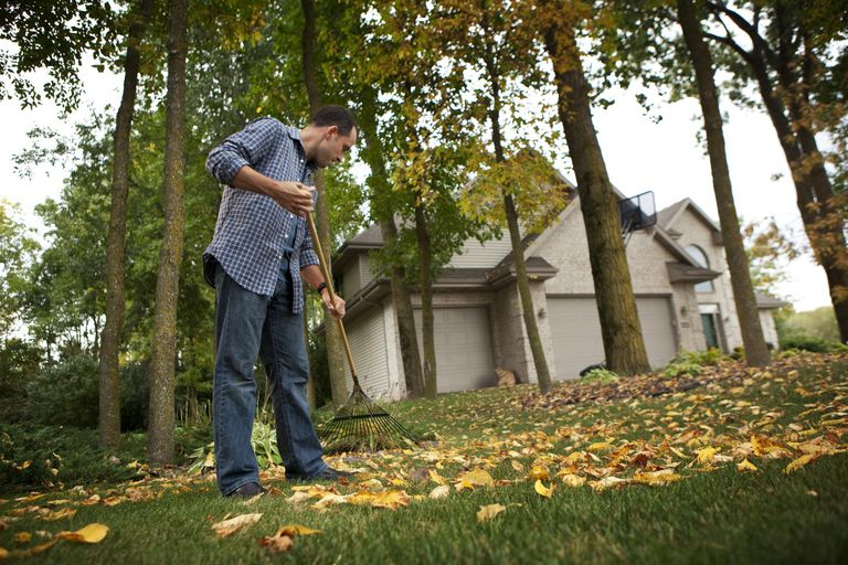 Man raking leaves in front yard