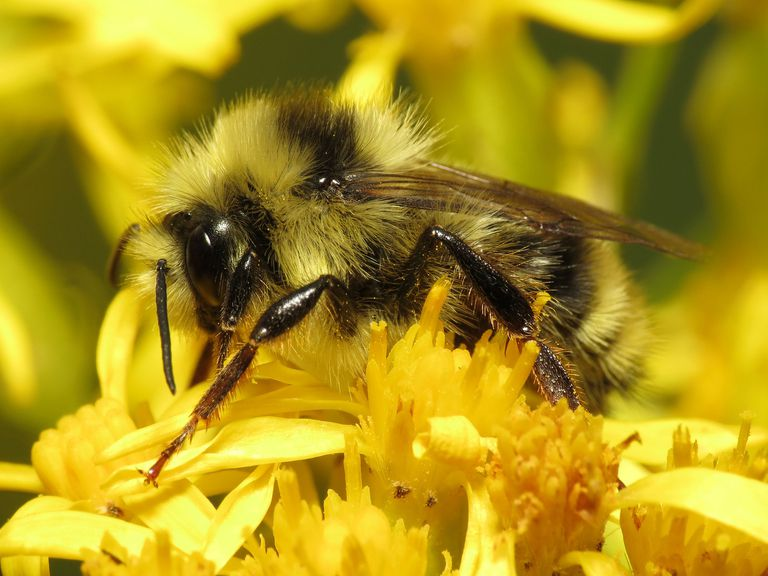 Bumblebee workers live only from spring to fall.