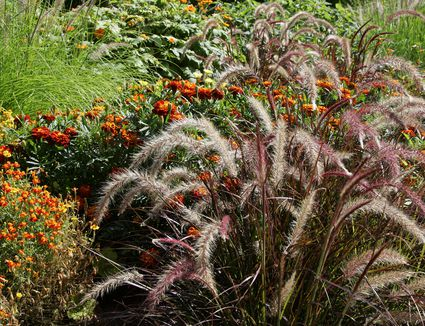 12 ornamental grasses that will stop traffic how to prune ornamental grasses landscaping basics workwithnaturefo