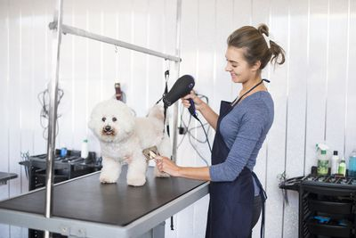 Learn how to start a self serve dog washing business here are some helpful tips on how to start a mobile dog grooming salon solutioingenieria Choice Image