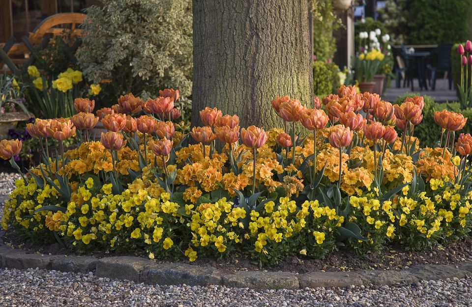 Tulips, primroses, and pansies under a tree