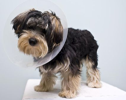 Dog Cat Spay Neuter Clinic Gilbert Az