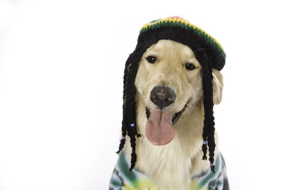 Crochet Braids on Hat