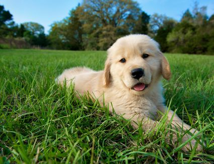 Natural Remedies To Constipation In Puppies