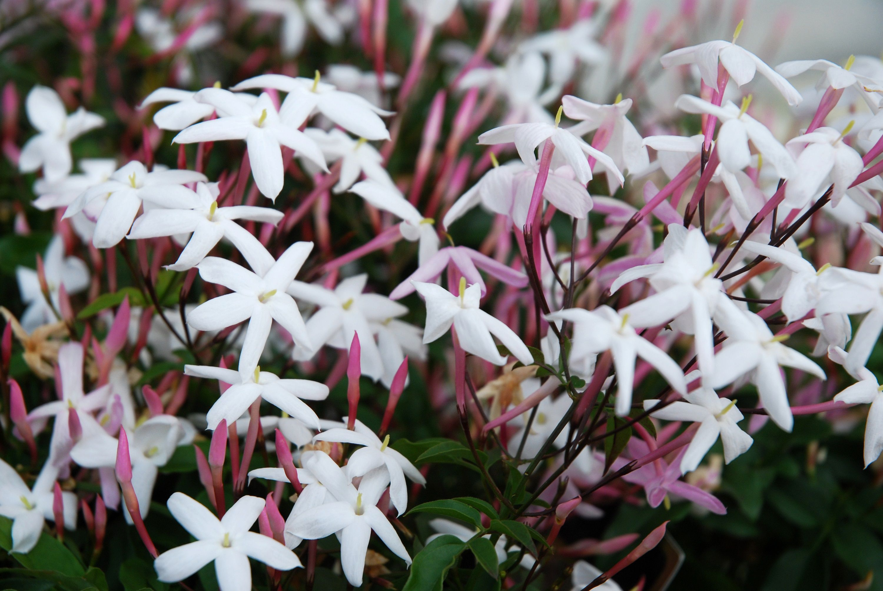 The 10 Best Smelling Plants For Your Garden