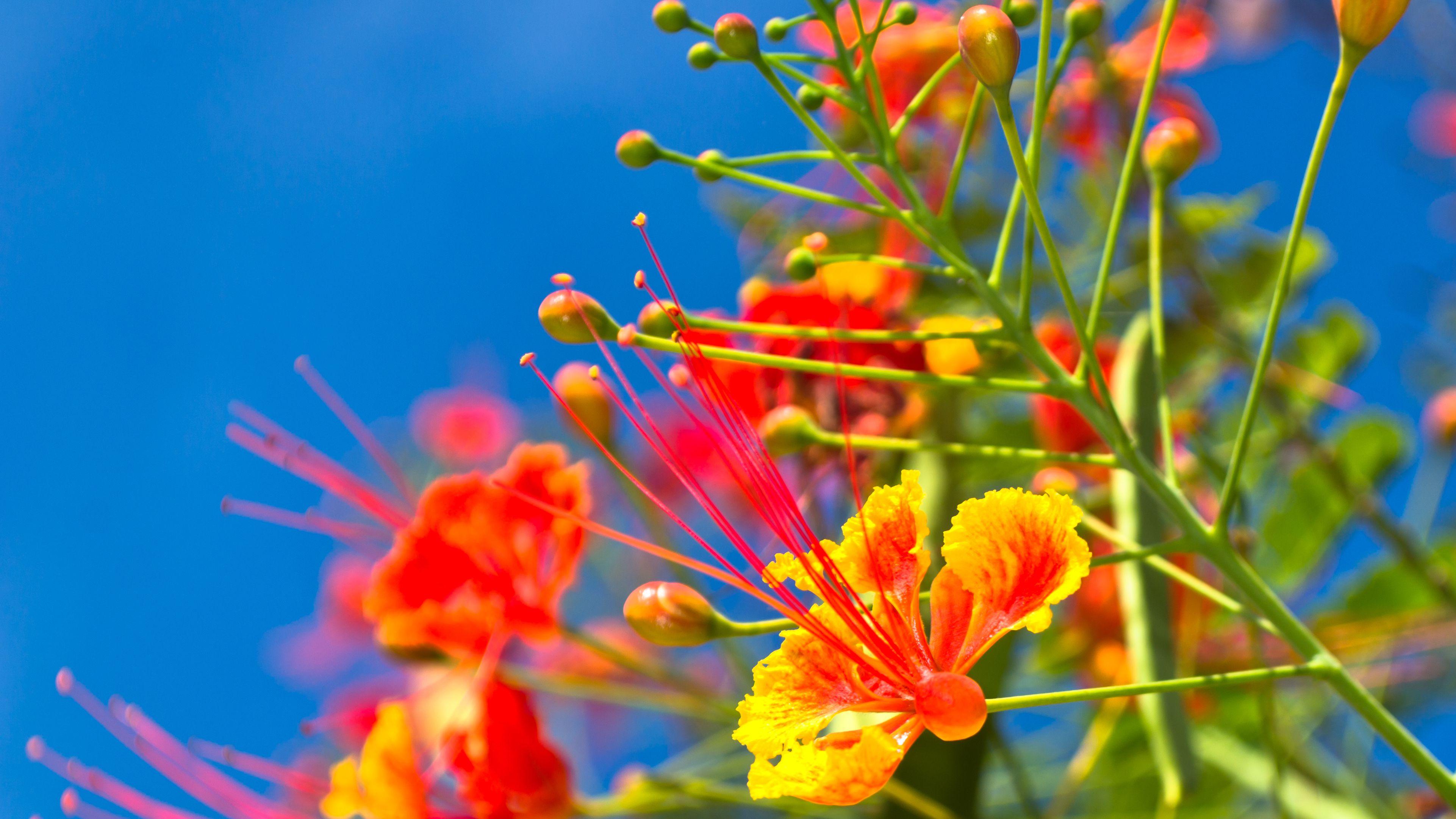 The Best Drought Resistant Plants
