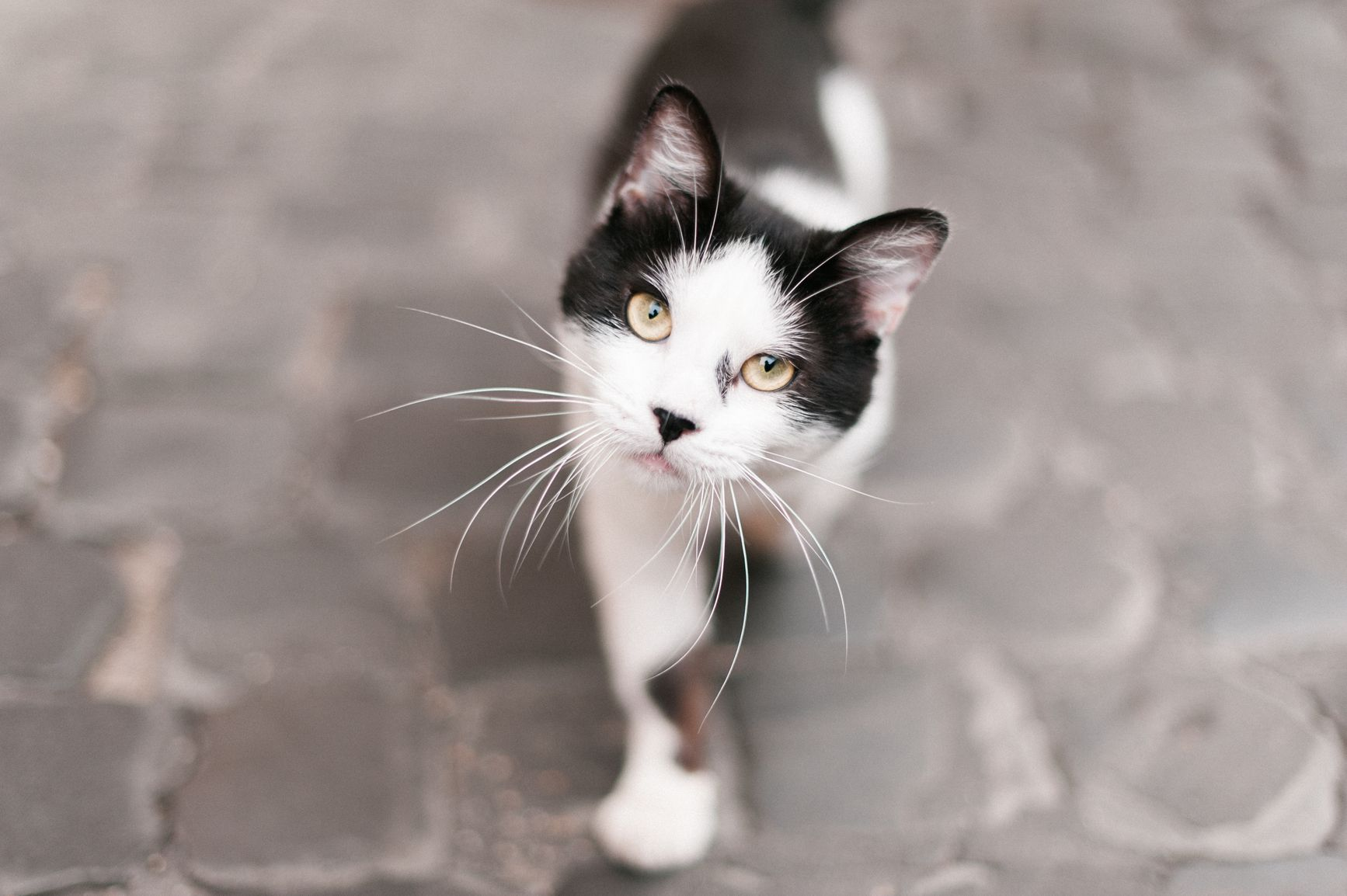 Cat Want Outside? Try These Tips to Keep Him Happily Indoors