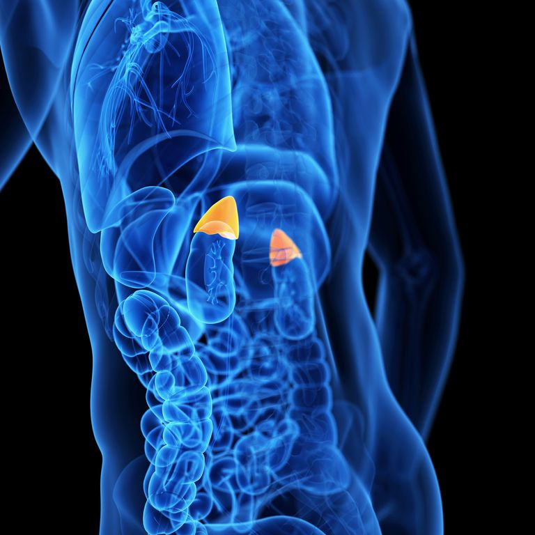 Adrenal Gland: Lung Cancer Spread To Adrenal Glands