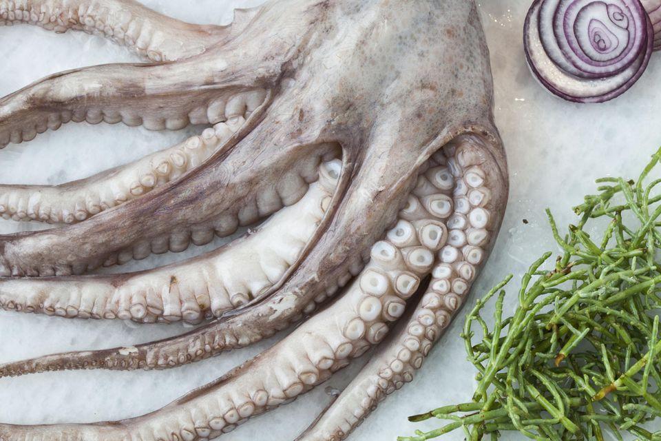 Octopus on Frozen Bed