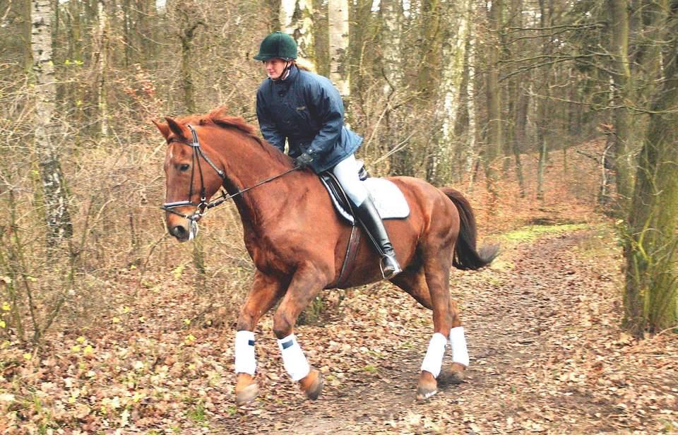 Rider Galloping Through Brush