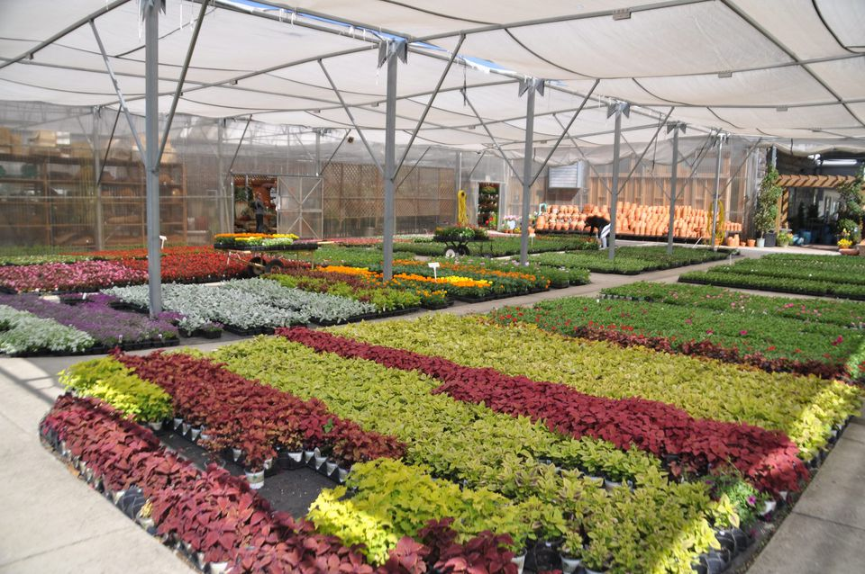 charlottes best nurseries and plant centers