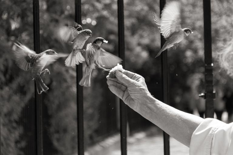 Close Up Of Hand Feeding Birds