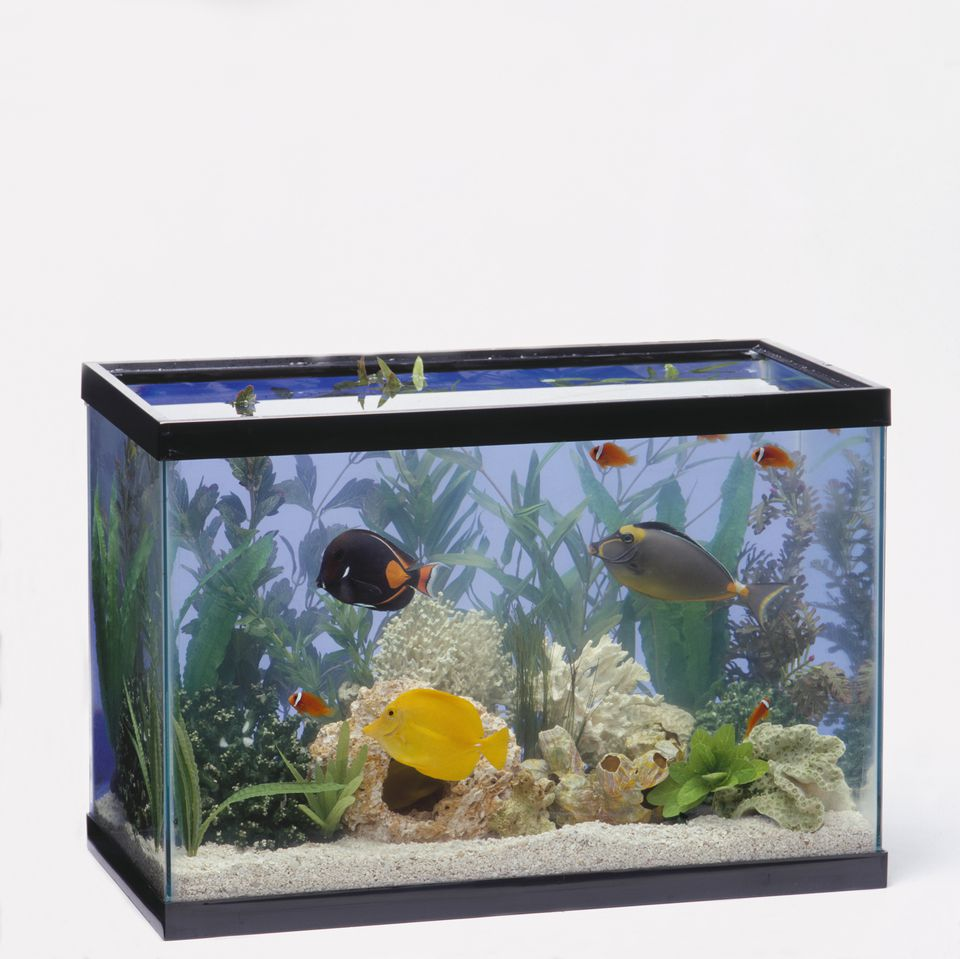 A guide to everything about aquarium heaters for Fish tank with filter and heater