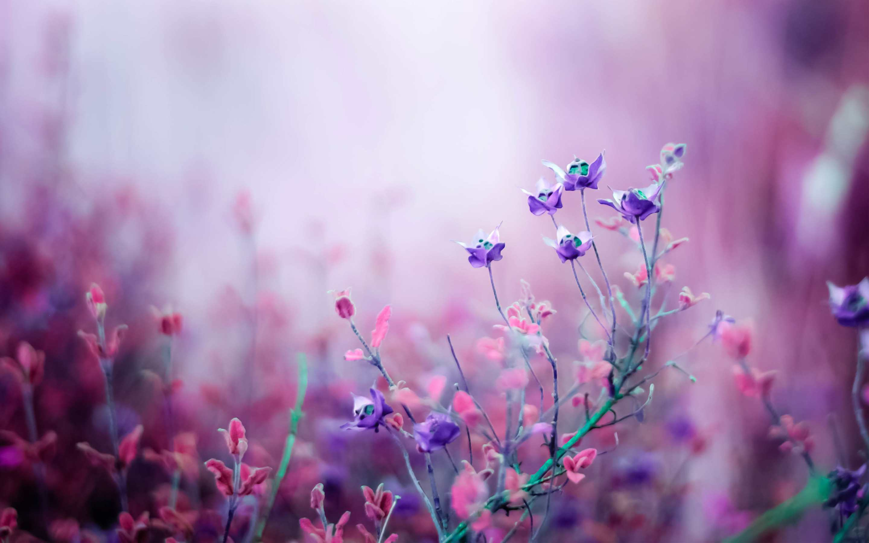 23 beautiful flower wallpapers mightylinksfo