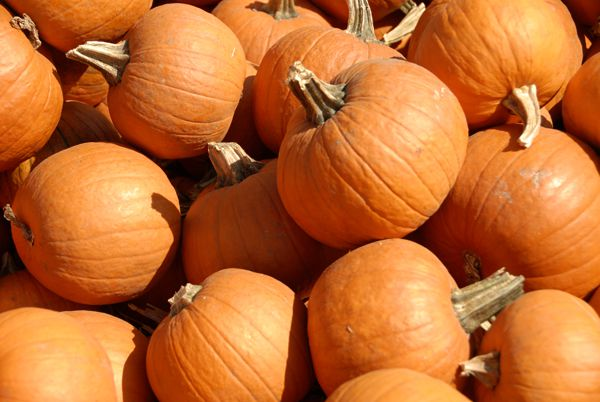 smallpumpkins21.jpg