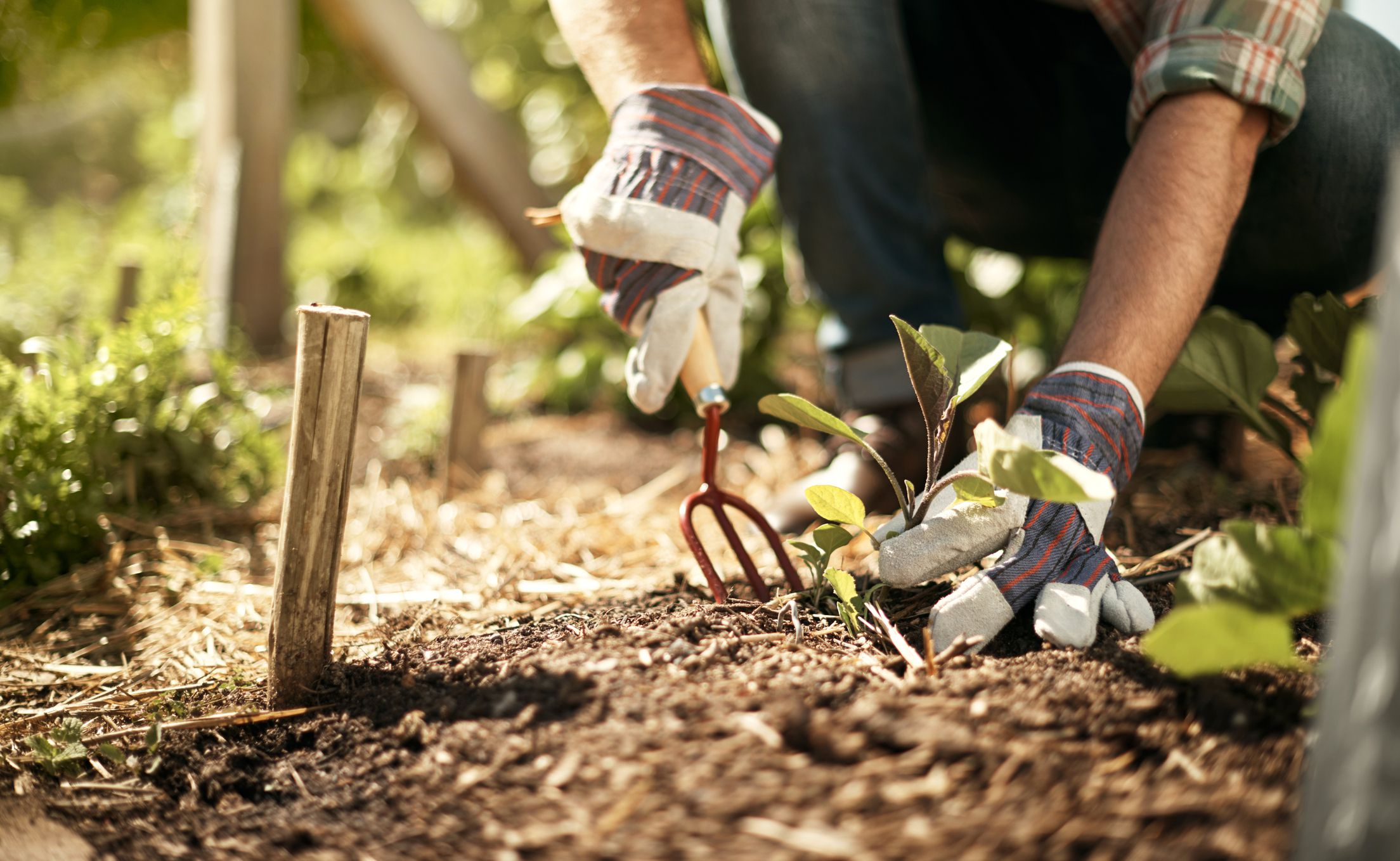 How to find out soil type for Where can i find soil