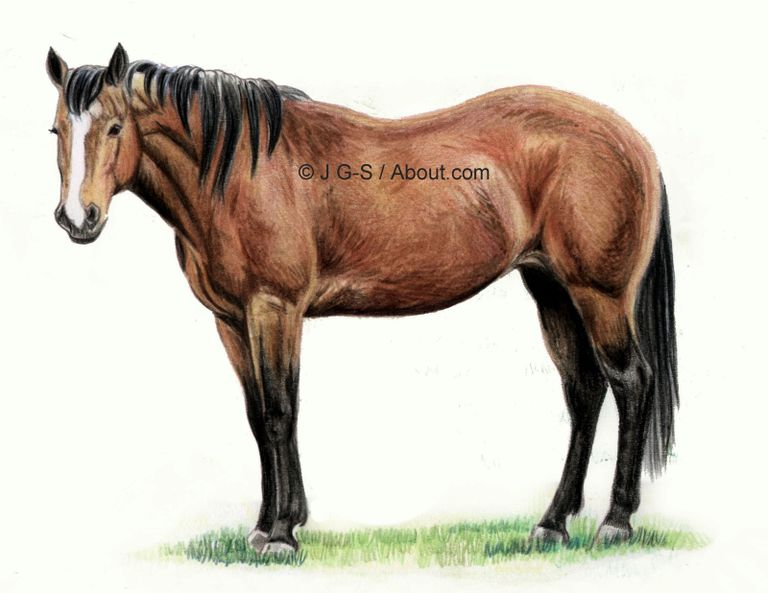 horse drawing tutorial