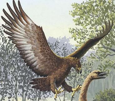 Haast's Eagle (Harpagornis) - Facts and Figures