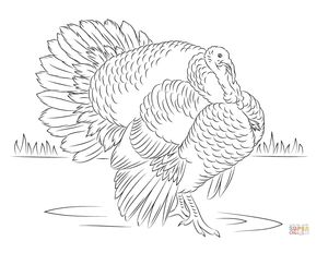 turkey coloring pages at super coloring - Free Turkey Coloring Pages