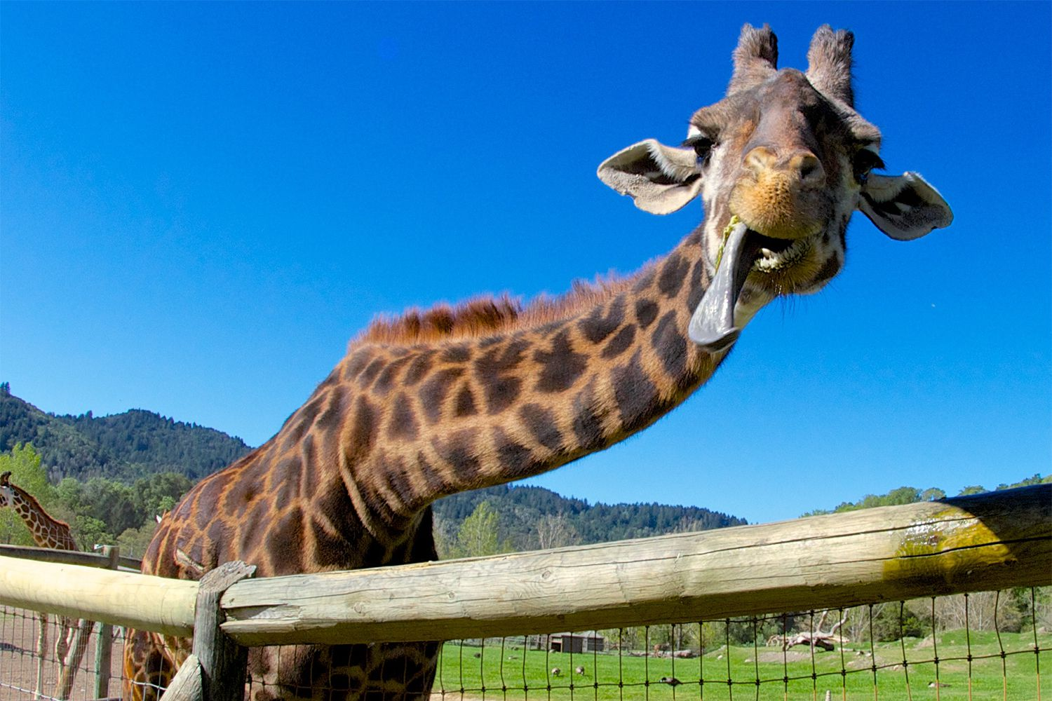 Napa Valley Hotels >> Safari West Animal Park: Like Africa in Napa Valley