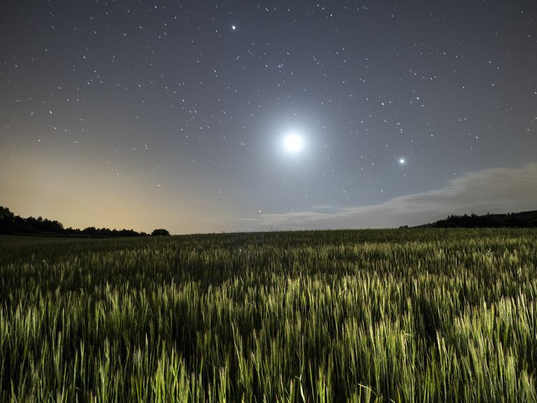 Wheat field illuminated by the moonlight