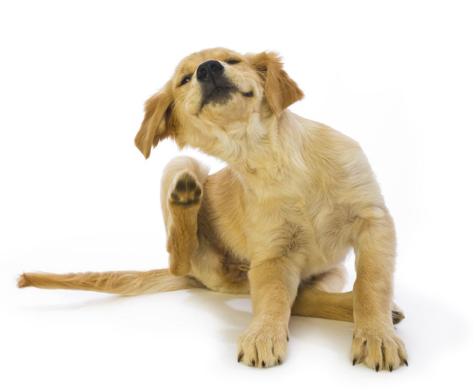 help for itchy dog scratching