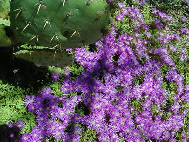 wildflower02_640.jpg