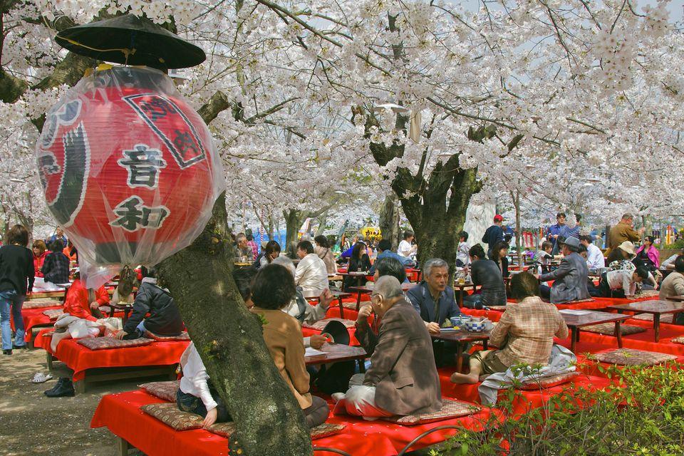 Japan's Hanami festival