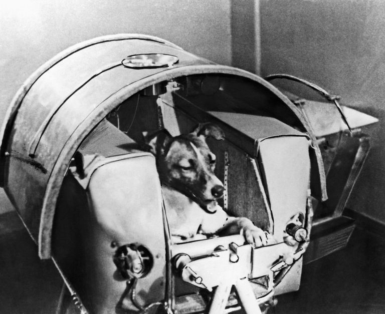 Laika, Russian Astro Dog