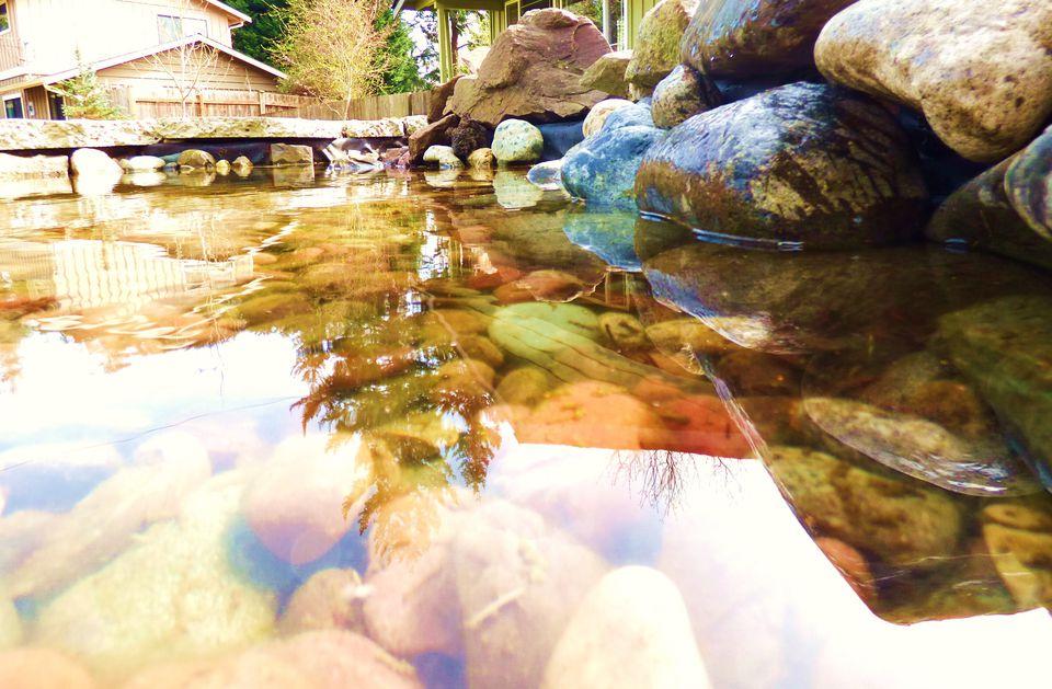 Building Your Own Garden Pond