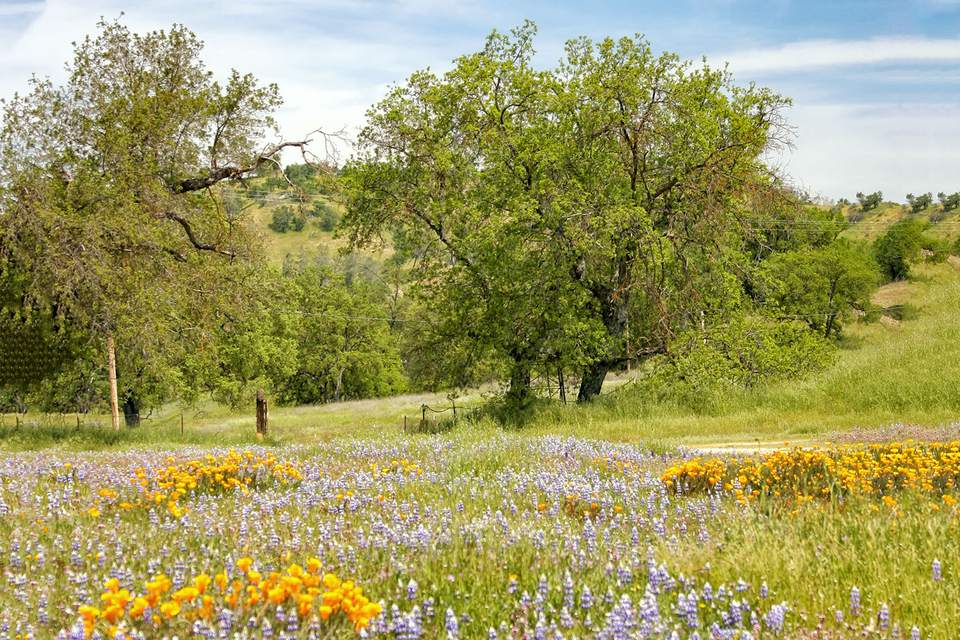Spring in the Valley of the Oaks