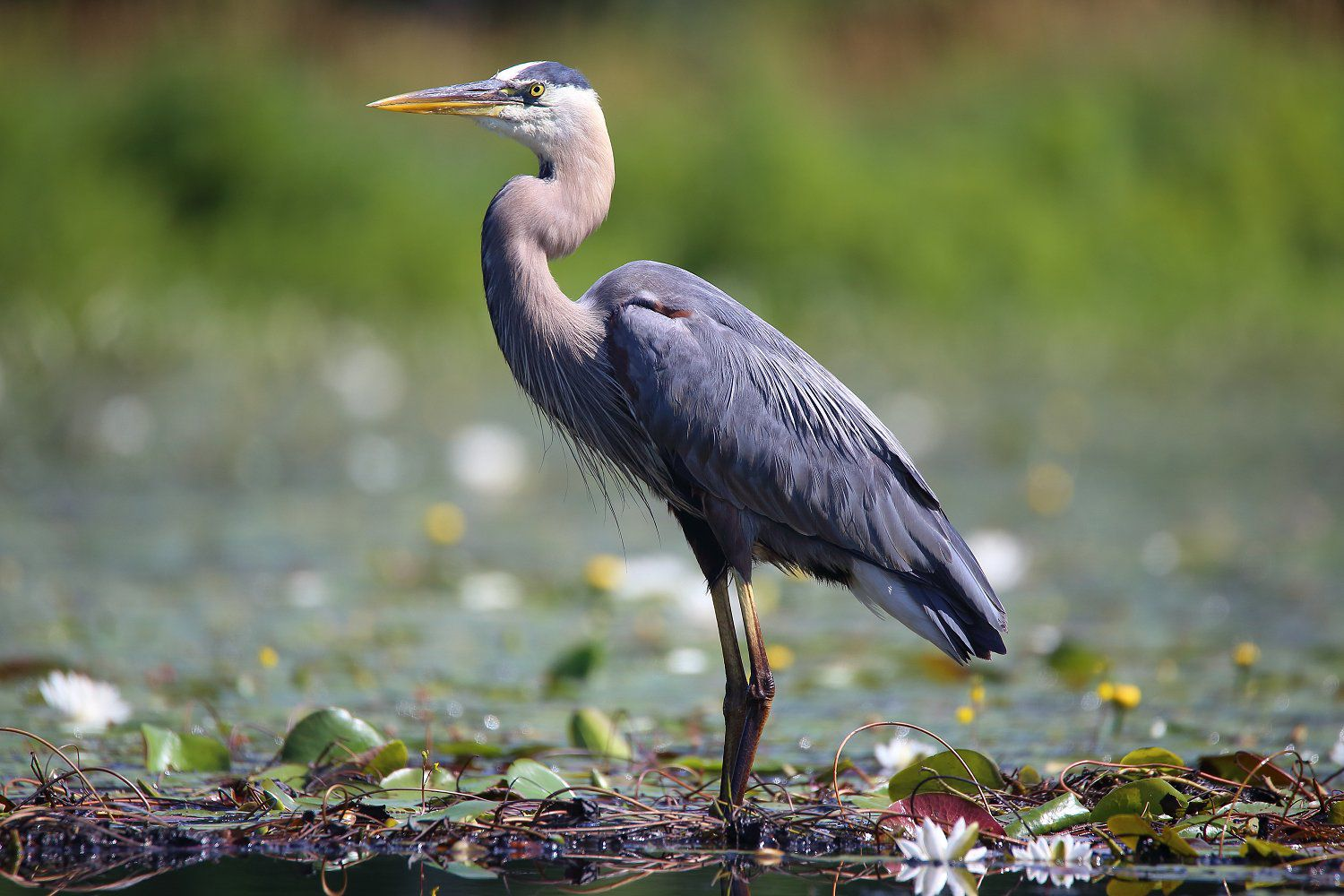 What Is A Wading Bird