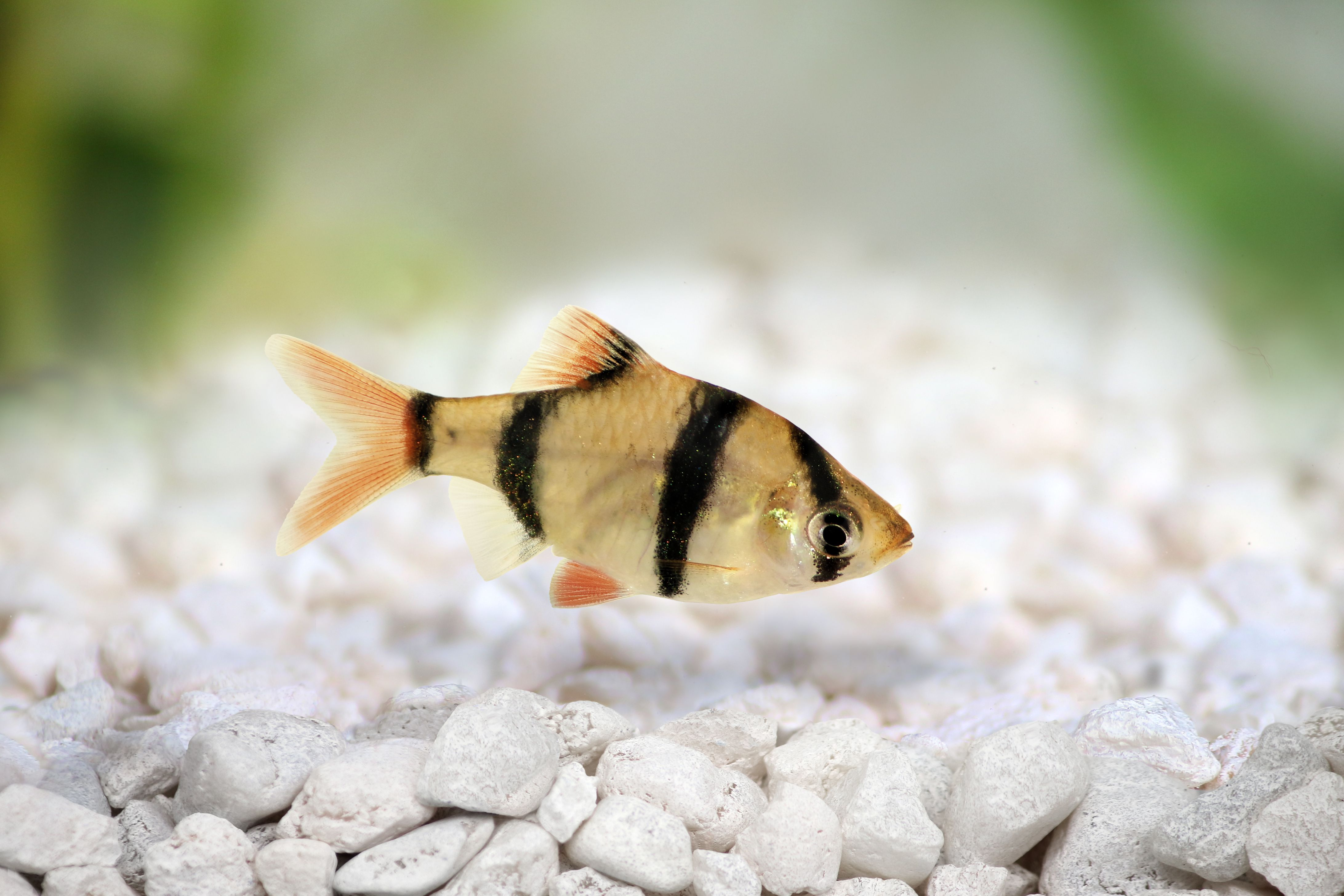Common Fish Names Beginning With The Letter T