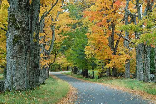 Fall Drives Are Better with a Fall Songs Playlist