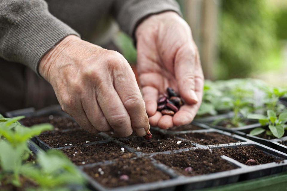 Mature hands planting seeds