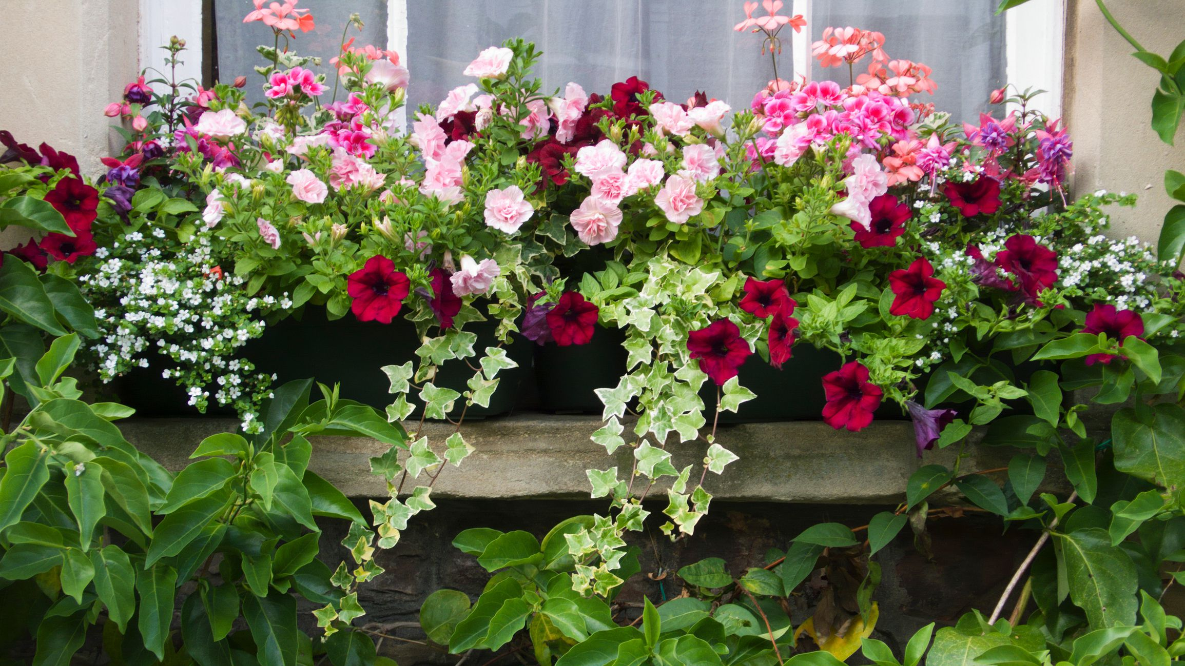 Gorgeous Flowering Container Garden Plants that Love Sun. 7 Best Plants for Fall Container Gardens