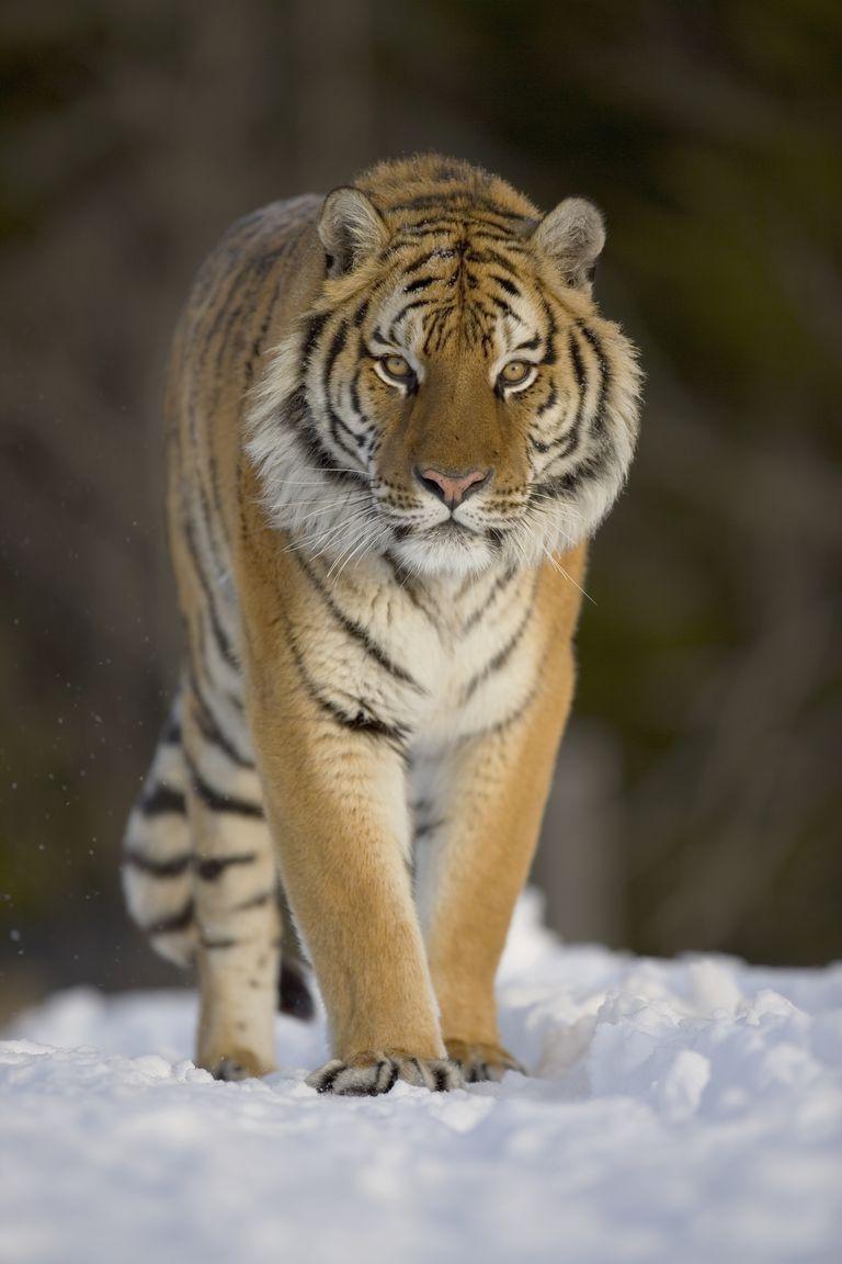 Getty Images/John Giustina