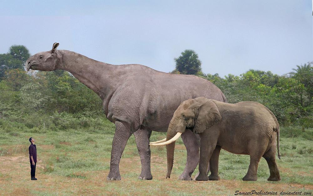 The 20 Biggest Prehistoric Mammals