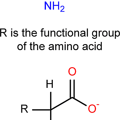 Amino acid dating