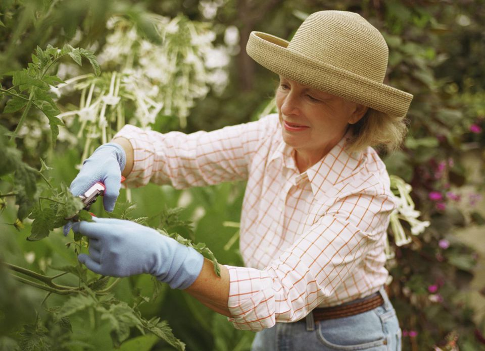 Woman pruning foliage