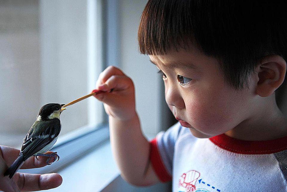 PeopleasianChineseChinaShanghaibabyboysbirdFeedingAnimalsPets