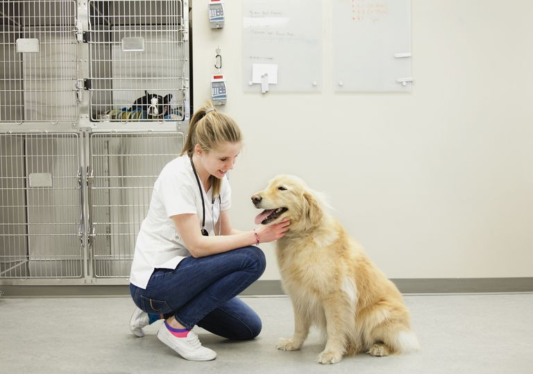 Female Vet with Golden Retriever