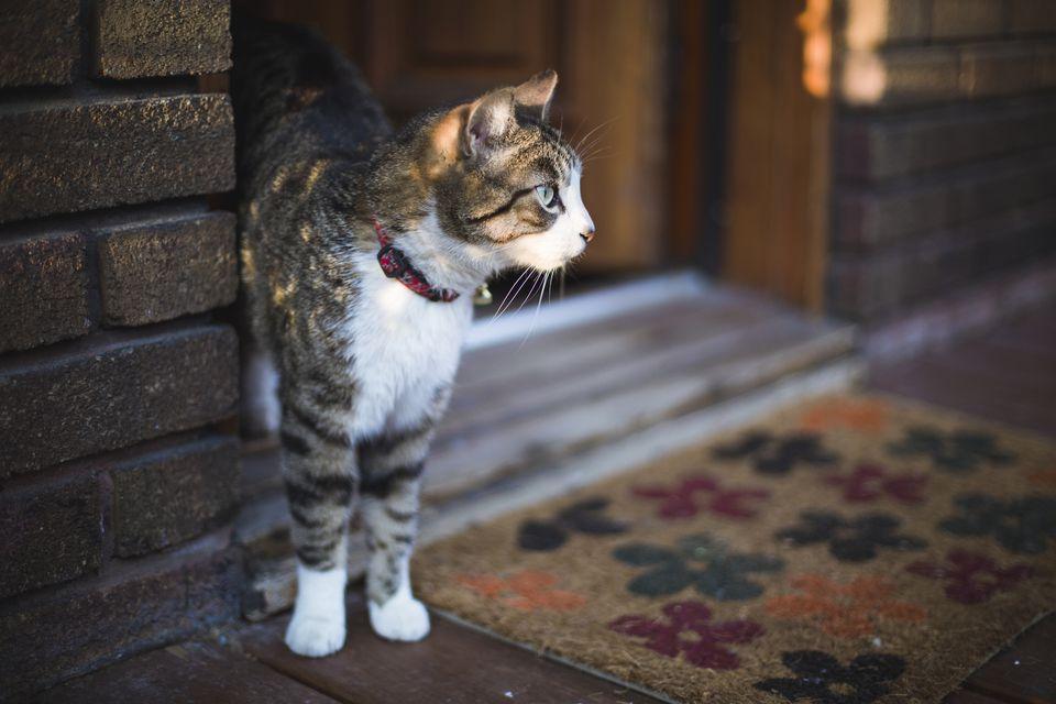 cat escaping outside front door