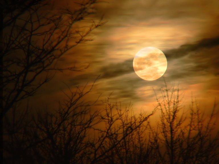 Full Moon Autumn
