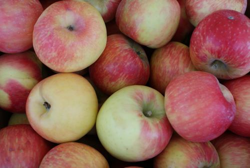 Image of Honey Crisp Apples