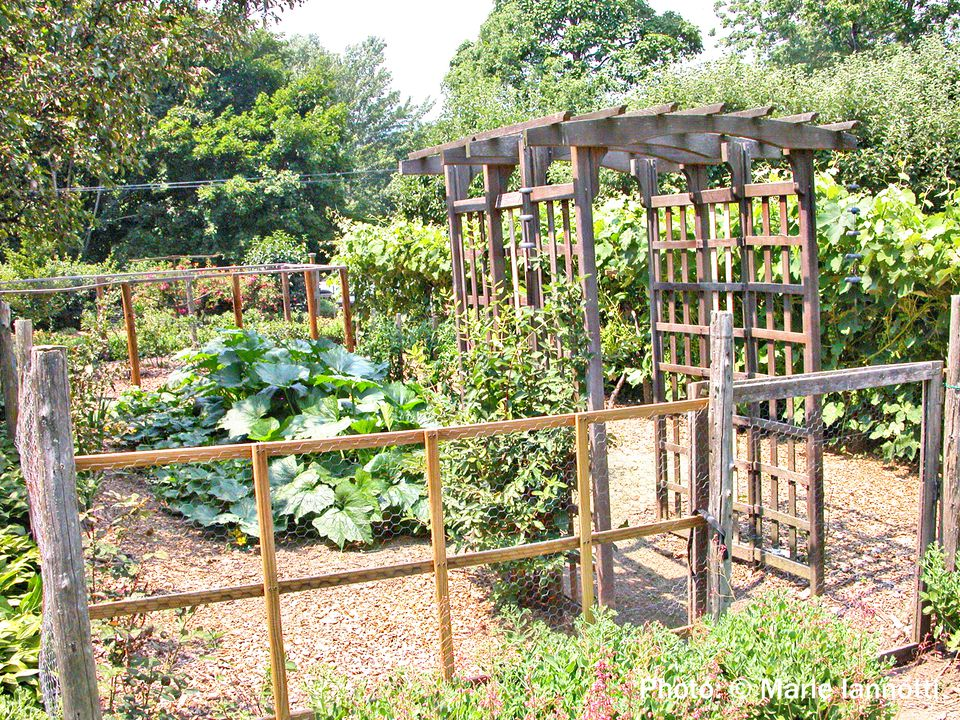 Planning and planting a vegetable garden for Planning your vegetable garden