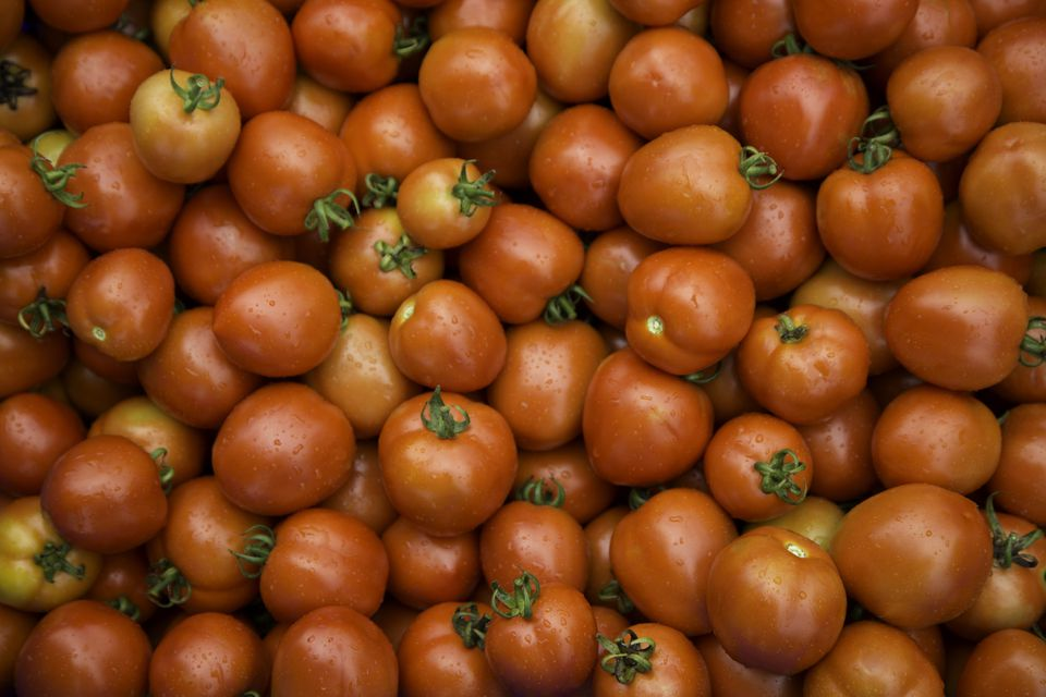 Fresh wet red ripe tomatoes on display
