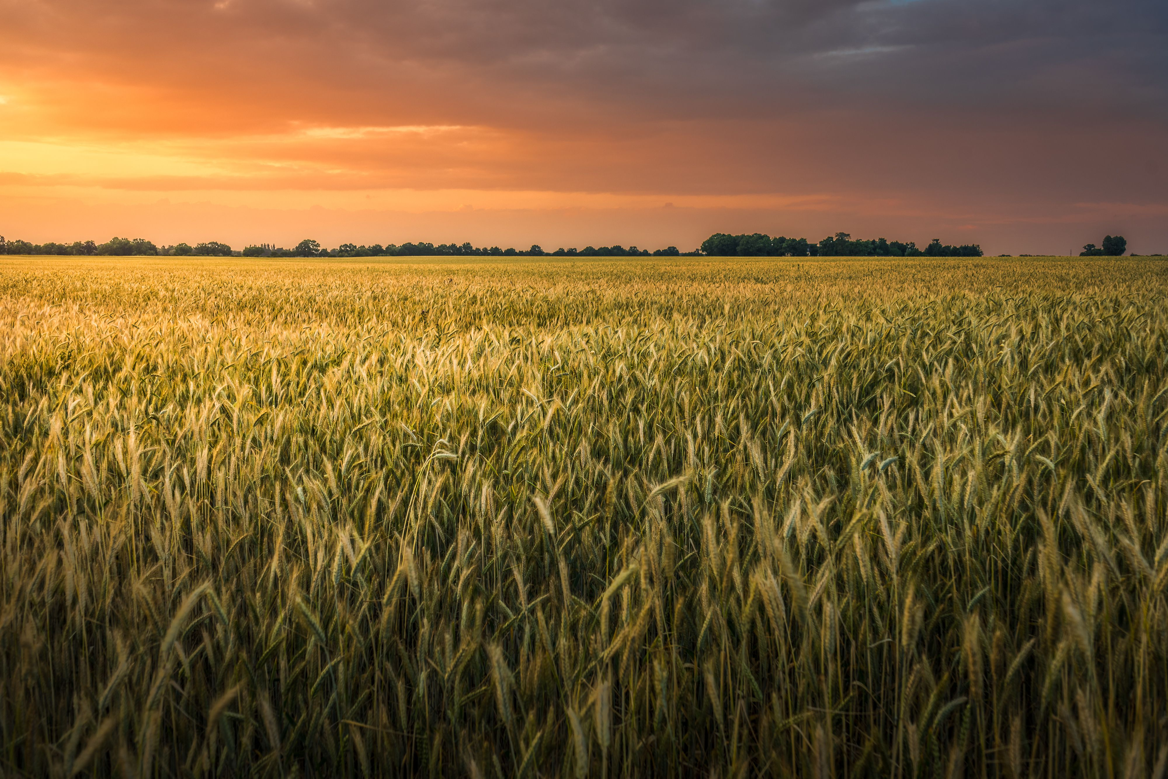 Bad Credit Loan >> Learn About Wheat Planting and Harvest Seasons