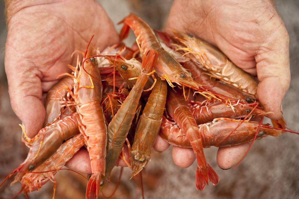 Whole Fresh Shrimp