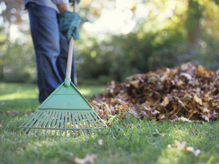raking yard
